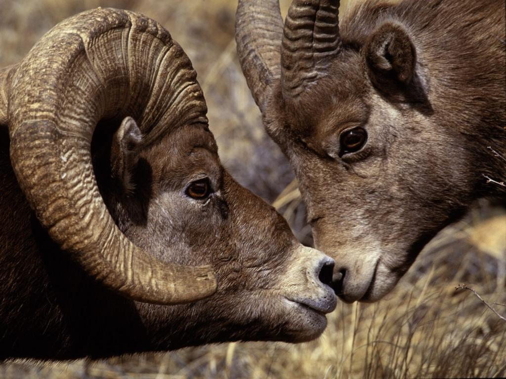 고화질 동물 바탕화면(동물사진)