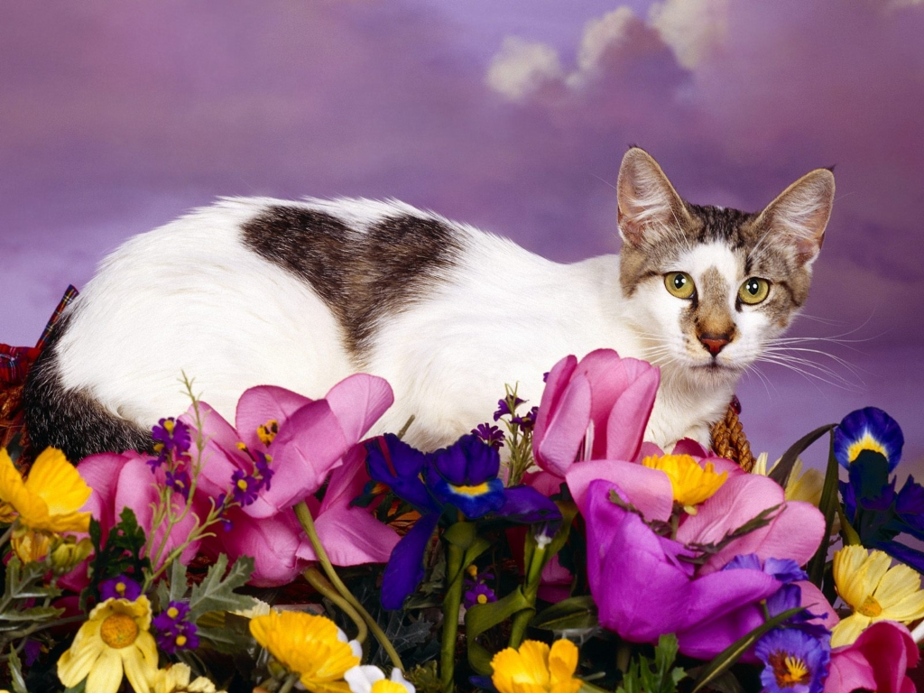 고양이 고화질사진, 고양이 바탕화면