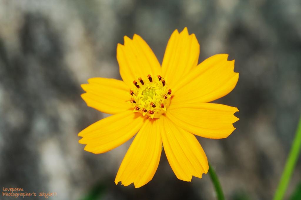 어딜가든 빠지지않는 꽃접사 - 헤이리마을에서, 사진동호회 포토스타일