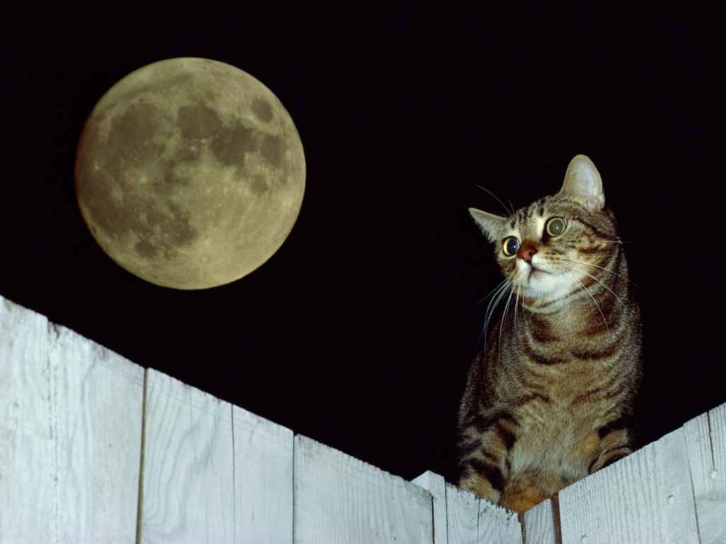 wallpaper, 고양이, 고양이 고화질사진, 고양이 바탕화면, 고양이 사진, 고양이바탕화면, 고양이배경화면, 고양이사진, 고화질 고양이 바탕화