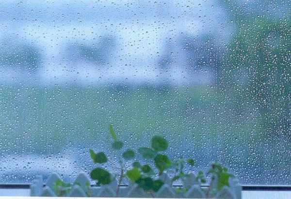 비, 사는 이야기, 우울한 날, 장례식, 장례식장, 장마, 죽음, 지루한 장마, 친구 아버지, 친구 아버지 장례식, 친구아버지
