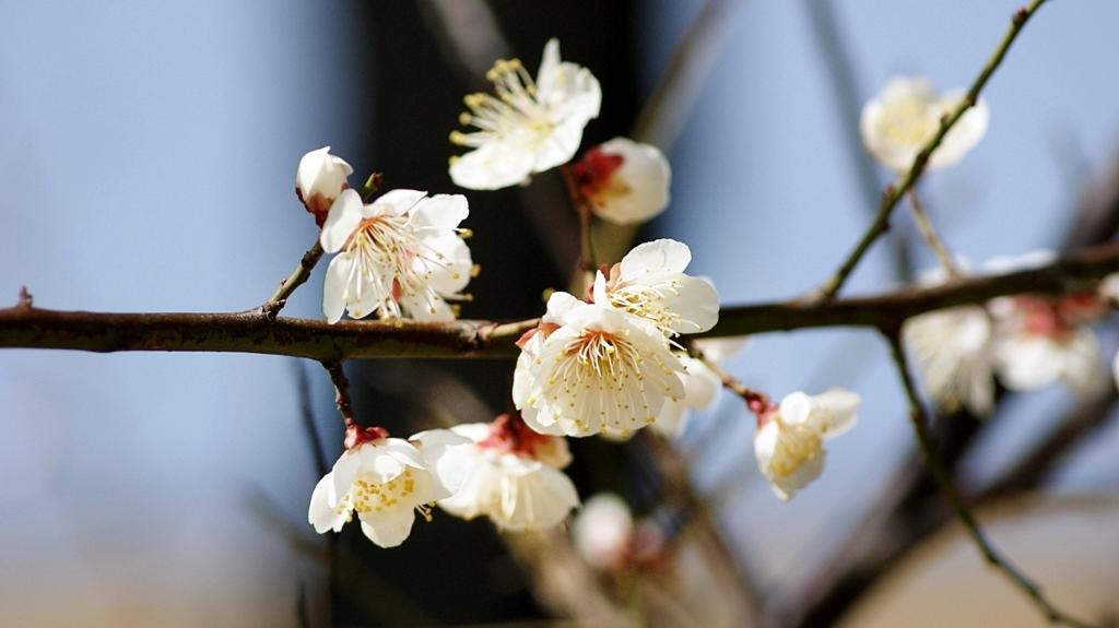 봄동산 매화
