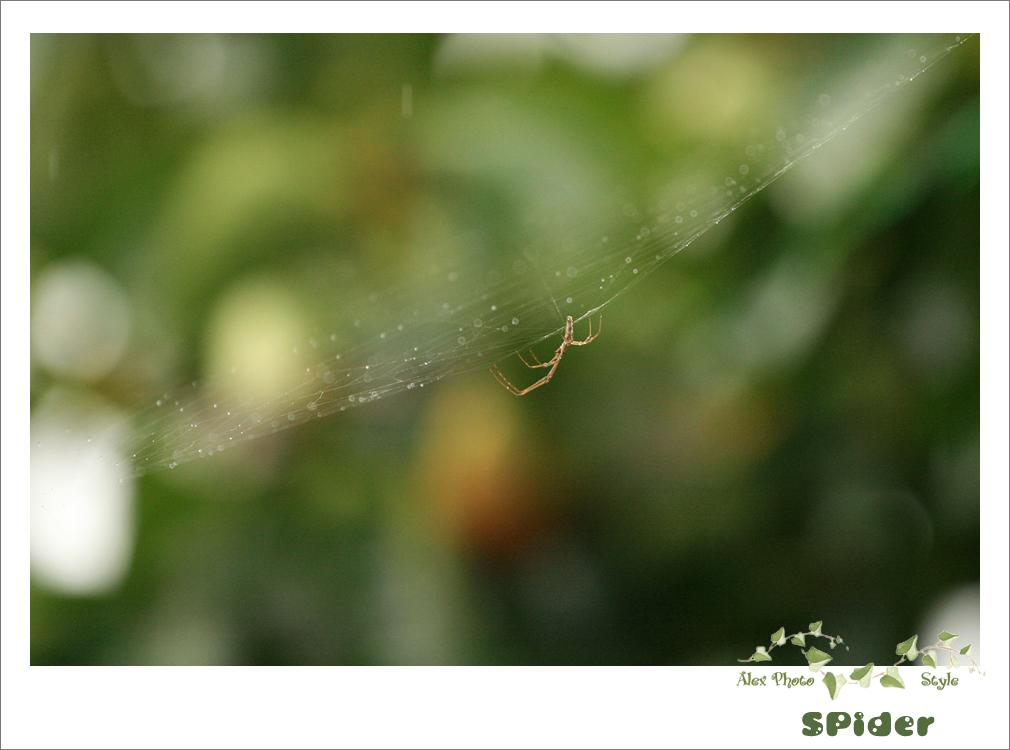 비오는 날의 풍경 (거미)